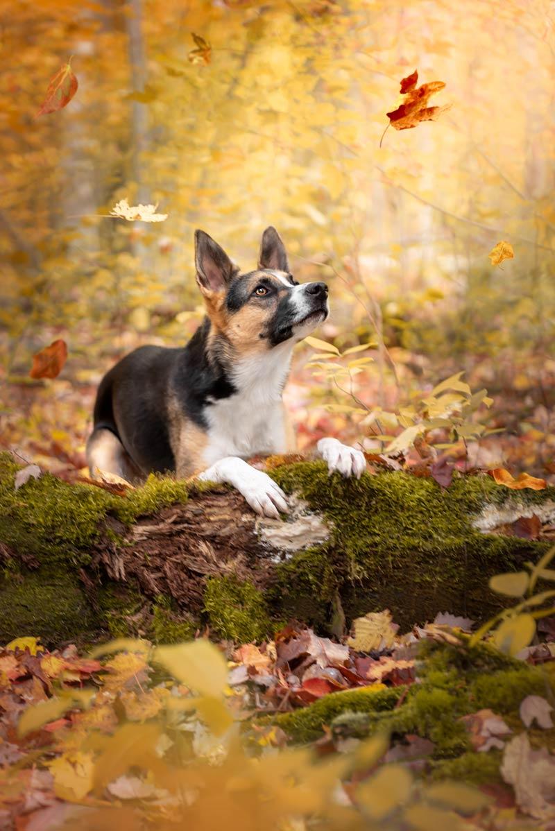 Dog Photography Ottawa