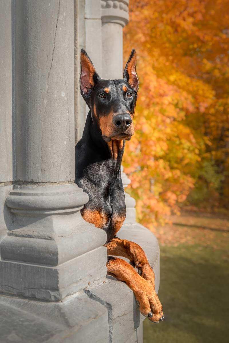Pet Photo Sessions
