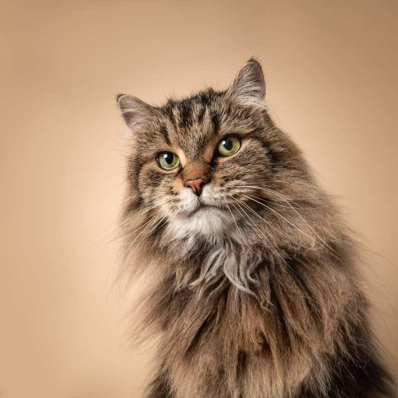 Cat Photographer Ottawa