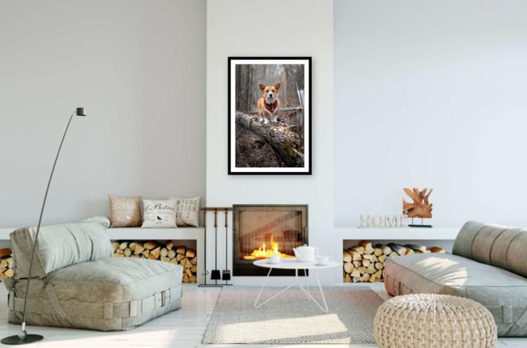 Pet Wall Art Gallery 6