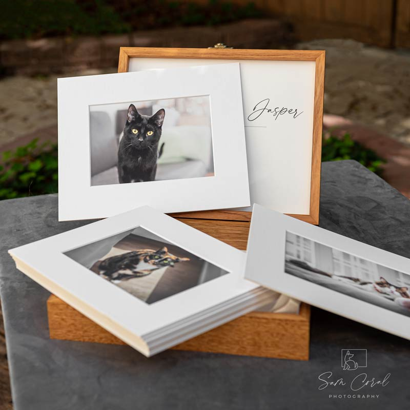 Pet Photography Albums and Boxes 1