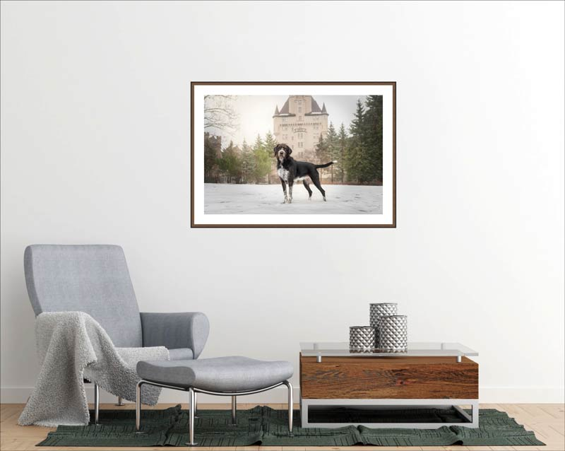 Pet Wall Art Gallery 4