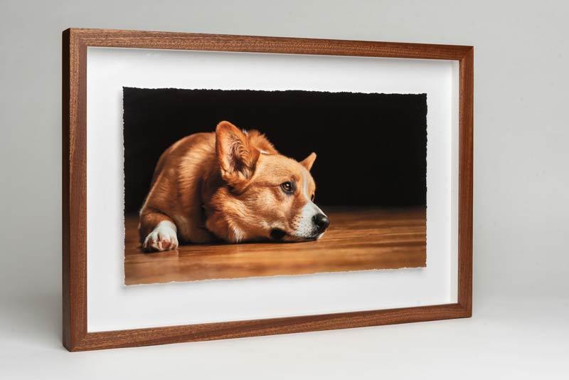 Pet Photography Frame