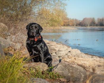 Finn Dog Photos