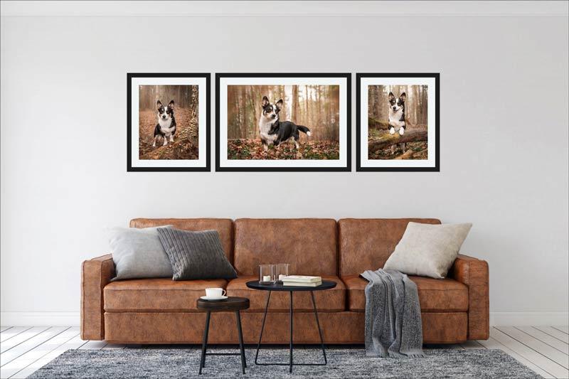 Pet Wall Art Gallery 1