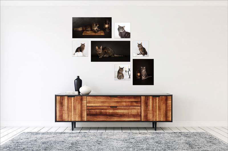 Pet Wall Art Gallery 3