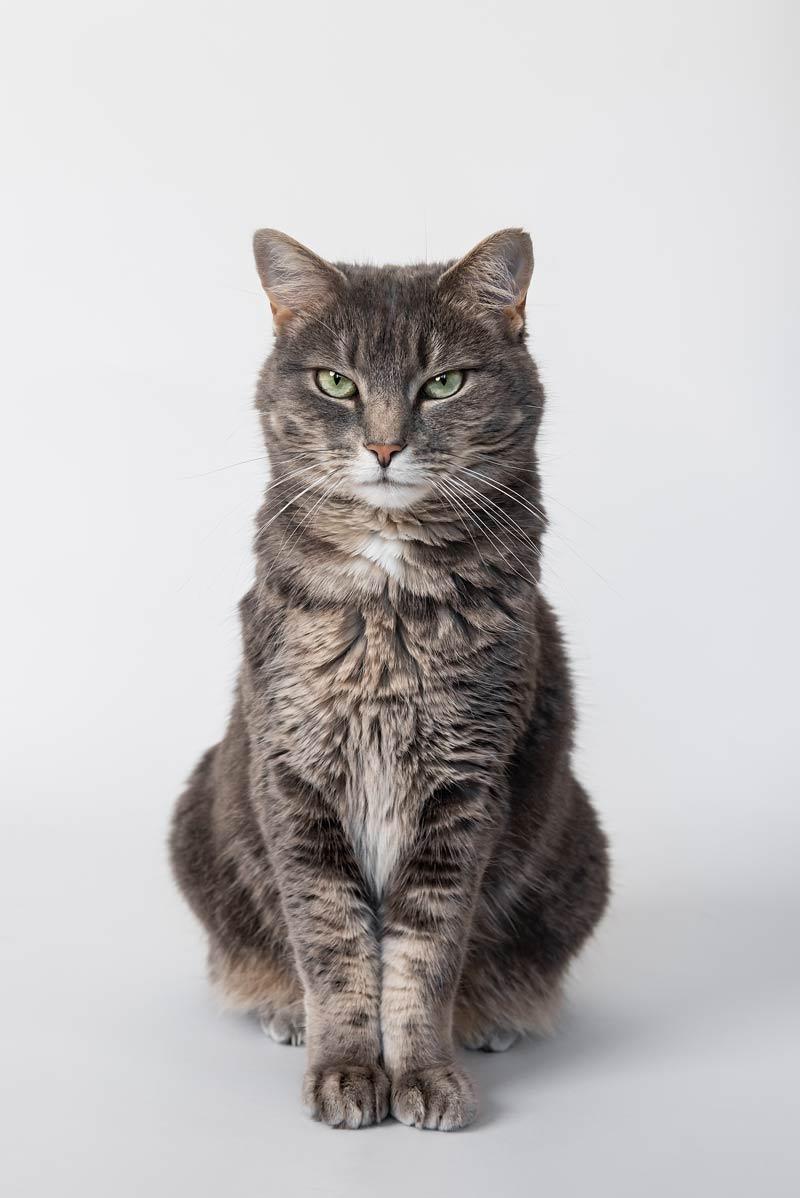 Cat Photography Ottawa