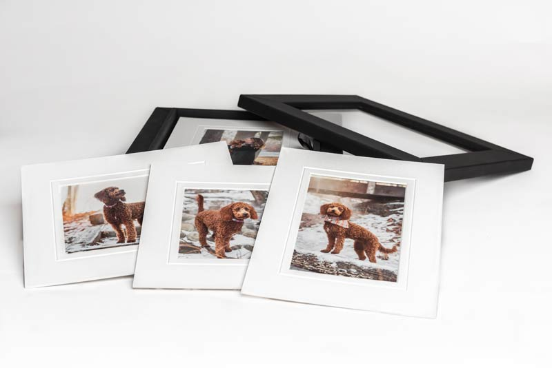 Pet Photography Albums and Boxes 4
