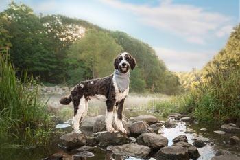 The Best Pet Photographer Ottawa