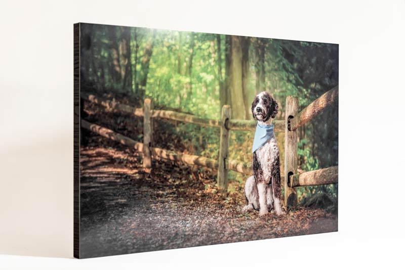 Pet Photography Metal Print