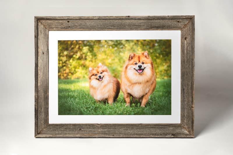 Pet Photography Barn Wood Frame