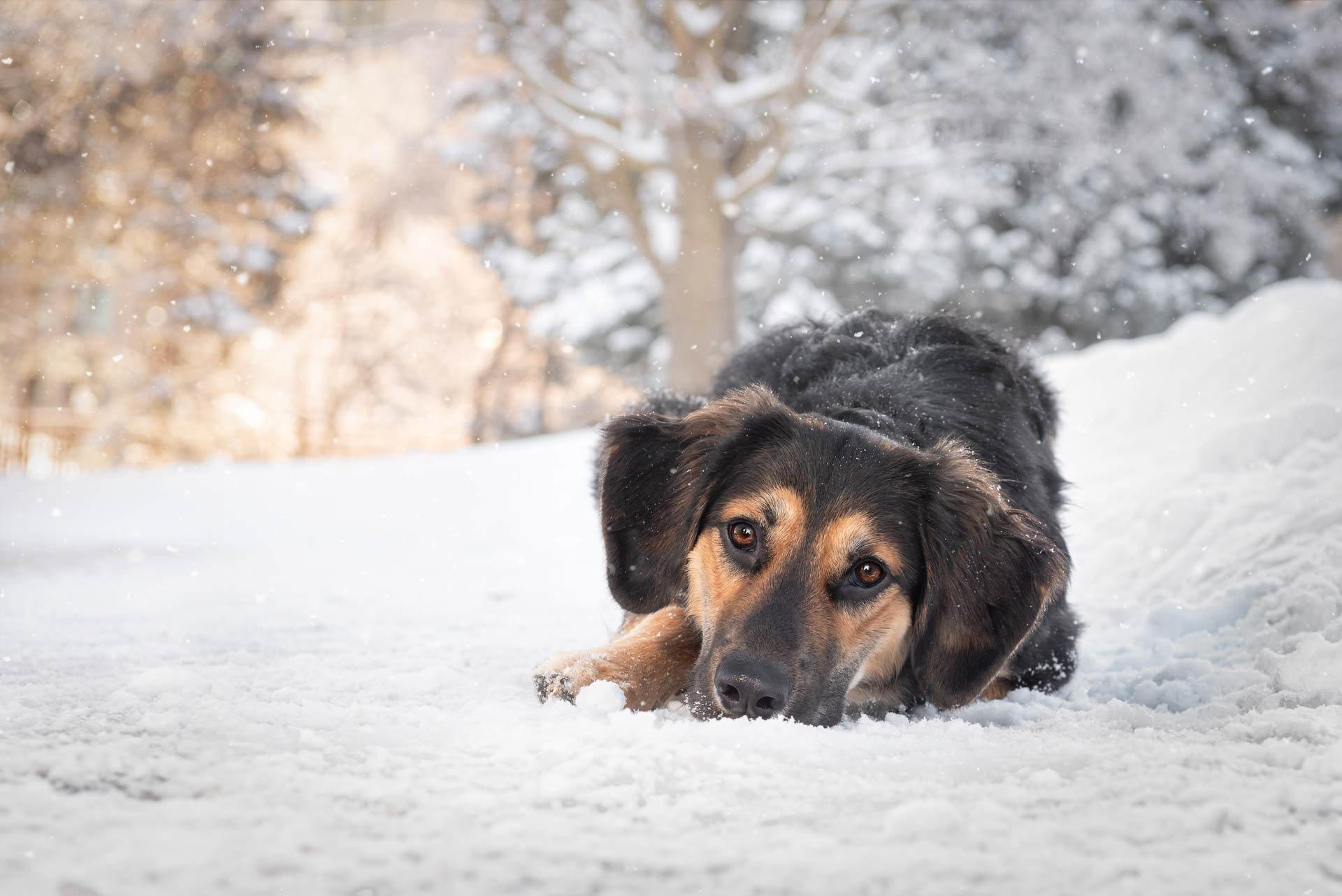 Dog Photography Snow Portraits