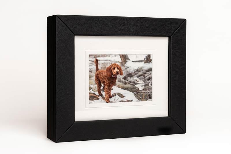 Pet Photography Memory Box
