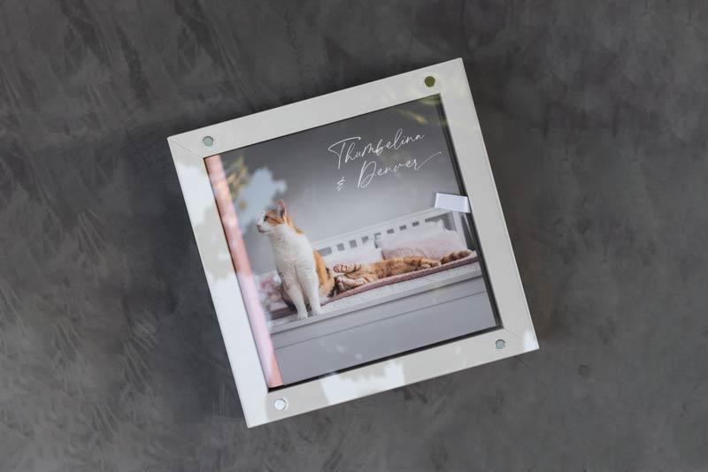 Pet Photography Showcase Album